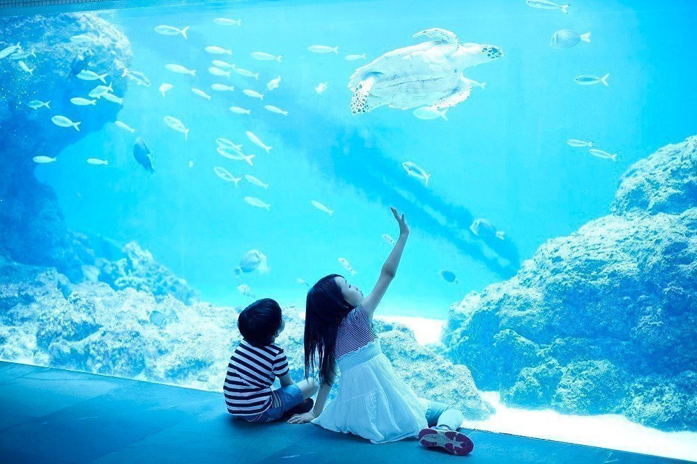 子供連れでも安心!冬休みにおでかけしたい全国おすすめ水族館15選の画像