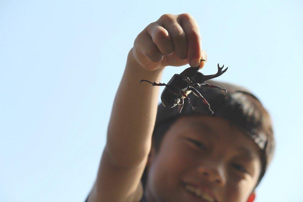 子どもたちが大好き!国内外のカブトムシ&クワガタ16選!!の画像