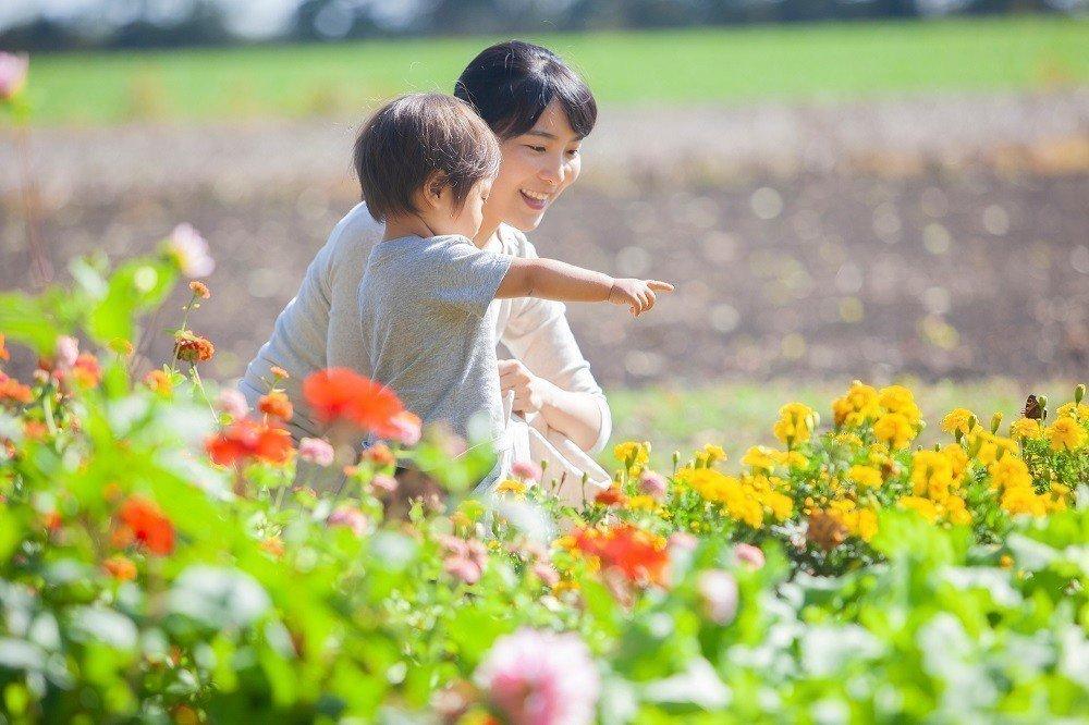 子どもと一緒に覚えたい!季節の花28選の画像