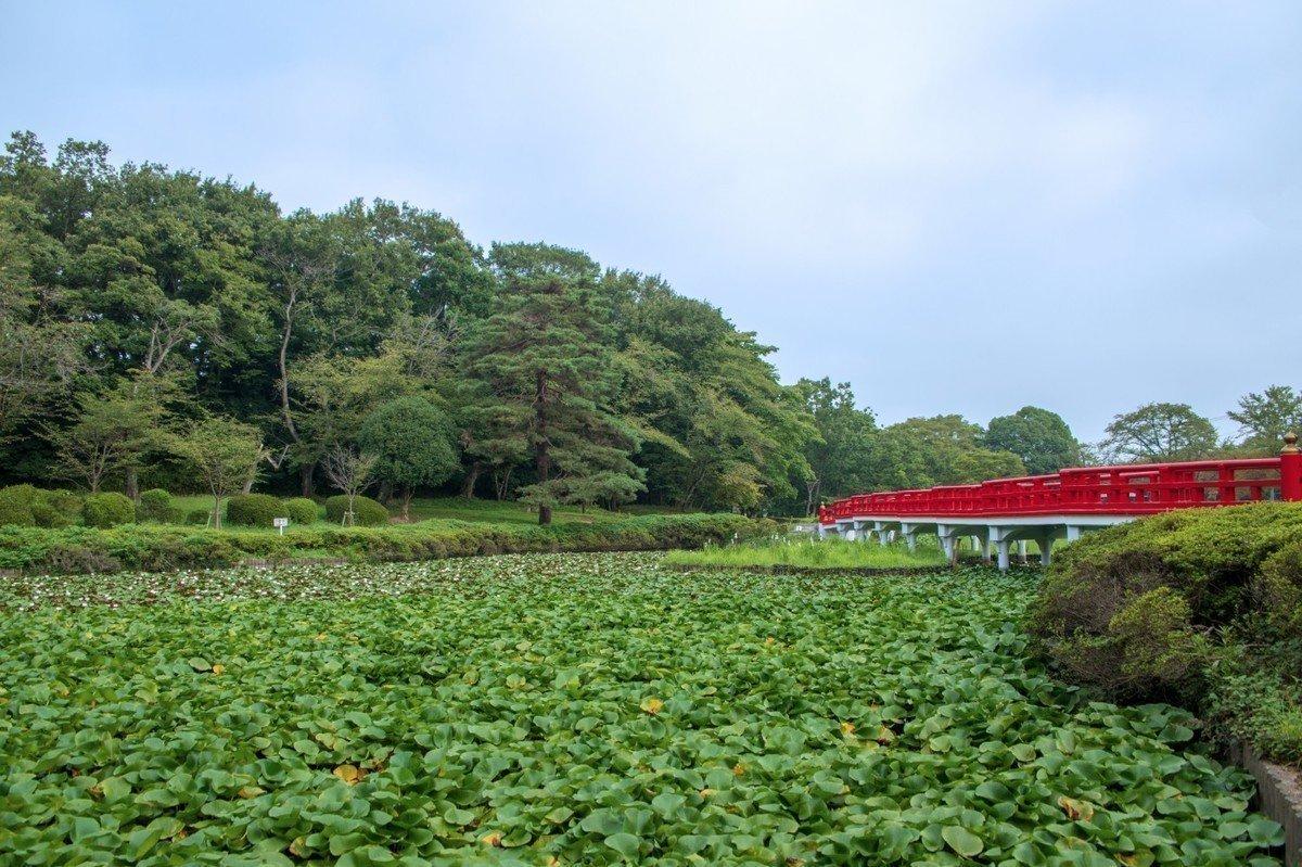 【2020年版】さいたま市岩槻区 地域型保育園 全2園をご紹介!の画像