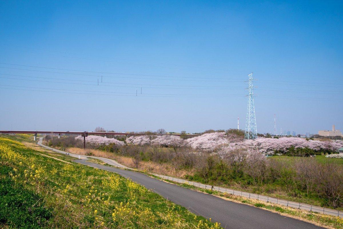 【2020年版】さいたま市桜区 認可外保育園 全7園をご紹介!の画像