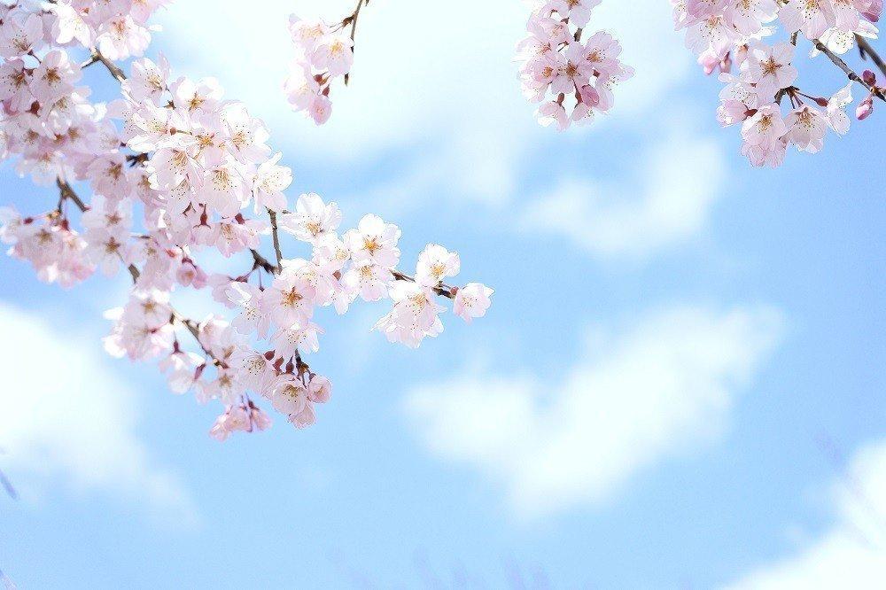 卒園・入園シーズンにピッタリ!イベント準備にも使える春の歌を大特集!の画像