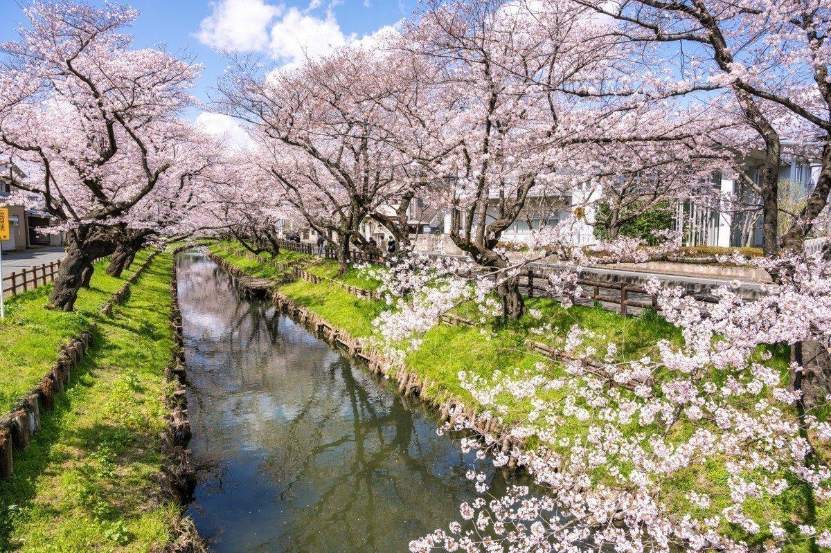 【2020年版】埼玉県川越市 認可外保育園 全39園をご紹介!の画像