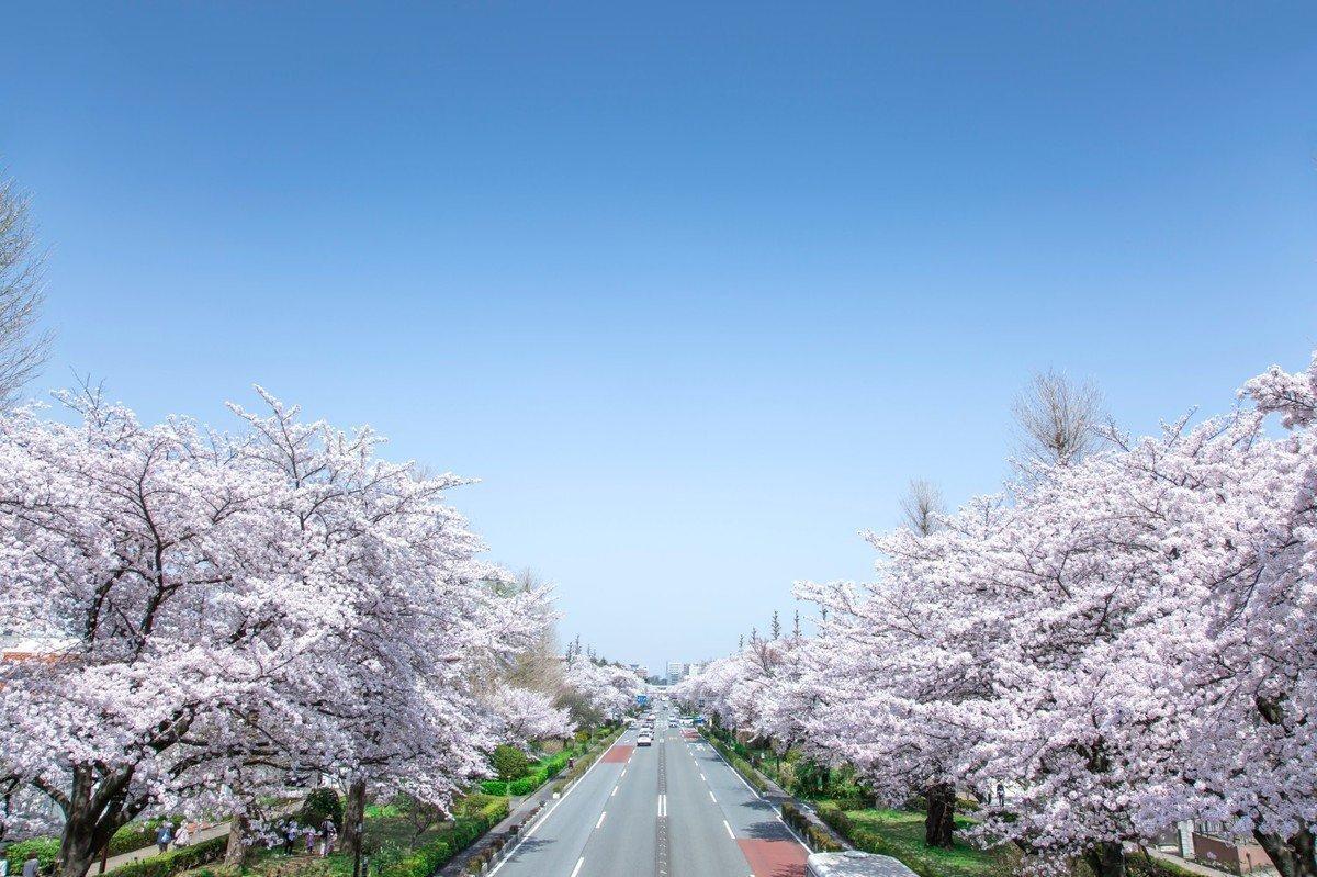 【2020年版】東京都国立市 認可・認証・認可外・地域型保育園 全22園をご紹介!の画像