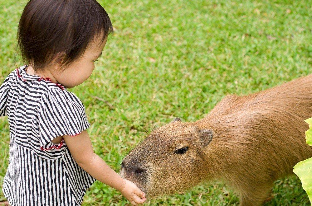 動物との距離が近い!幼い子連れが楽しめる全国の動物園24選の画像